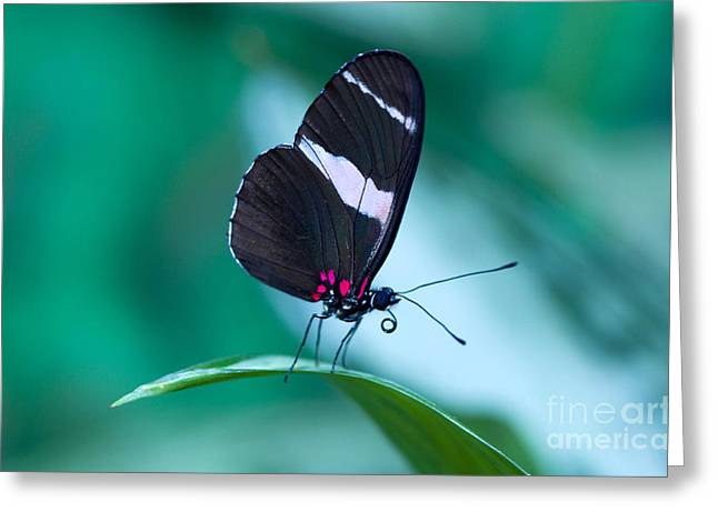 Costa Photographs Greeting Cards - Beauty Of Costa Rica Greeting Card by Bob Christopher
