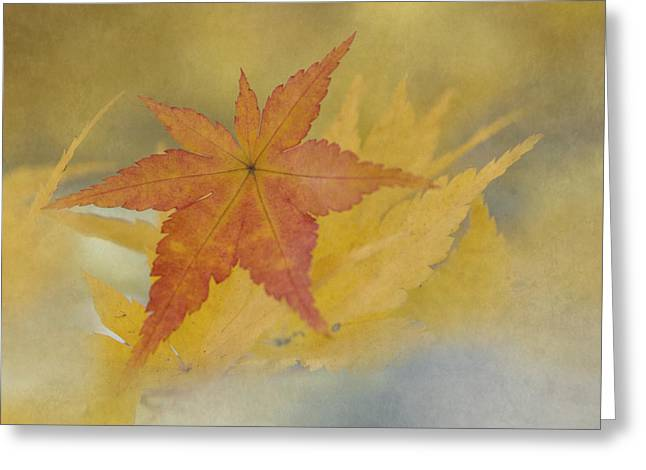Yellow Leaves Greeting Cards - Beauty of Difference Greeting Card by Angie Vogel