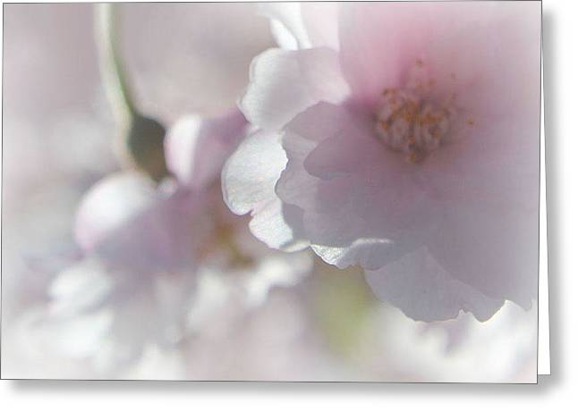 Easter Greeting Cards - Beauty of Spring Greeting Card by  The Art Of Marilyn Ridoutt-Greene