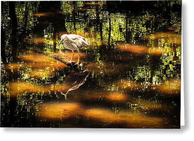 Reflections In River Greeting Cards - BEAUTY of the BOG Greeting Card by Karen Wiles