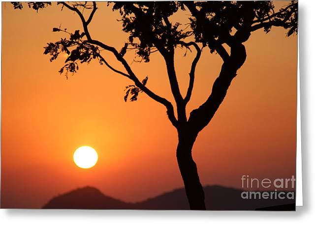 Bamboo House Greeting Cards - Beauty of the Nature Greeting Card by Four Hands Art