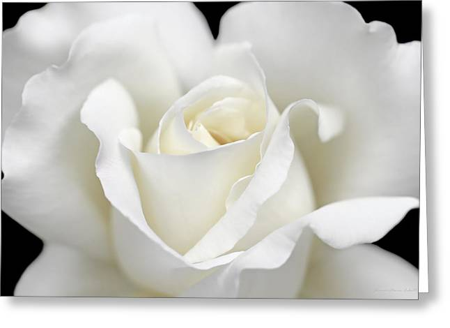 Ivory Roses Greeting Cards - Beauty of the White Rose Flower Greeting Card by Jennie Marie Schell