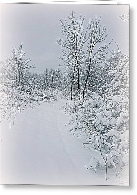 Kay Novy Greeting Cards - Beauty Of Winter Greeting Card by Kay Novy
