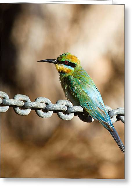 Avian Greeting Cards - Beauty on chains Greeting Card by Mr Bennett Kent