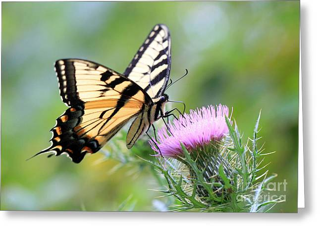 Beauty On Wings Greeting Card by Geoff Crego