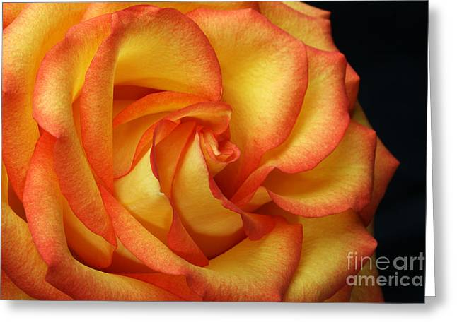 Layer Greeting Cards - Beauty Unfolds Greeting Card by Judy Whitton