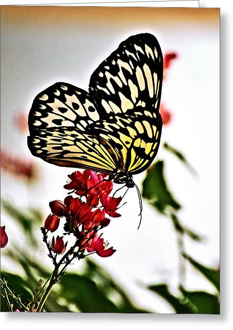 Beauty Wing Greeting Card by Marty Koch