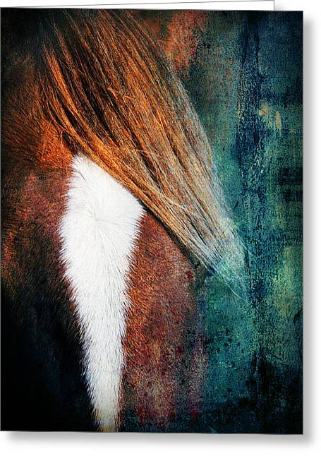 Race Horse Greeting Cards - Beauty3 Greeting Card by Mark Ashkenazi