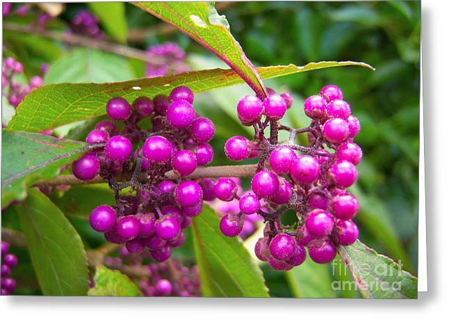 Berry Greeting Cards - Beautyberry Greeting Card by Loreta Mickiene