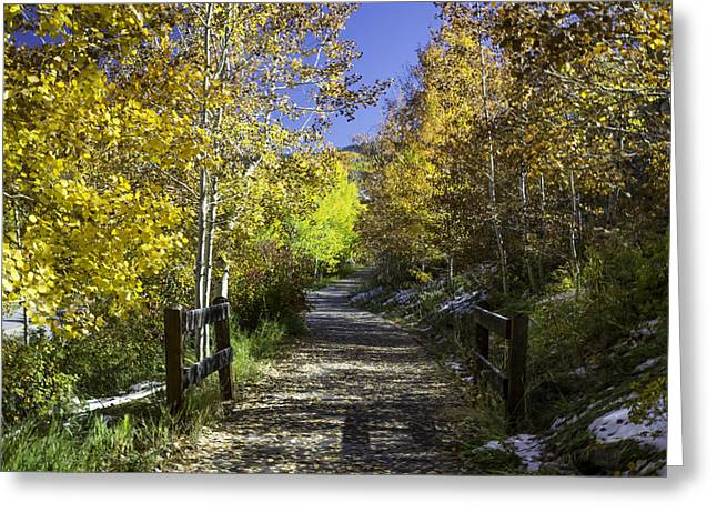 Forest Greeting Cards - Beaver Creek Bike Path Greeting Card by Michael J Bauer