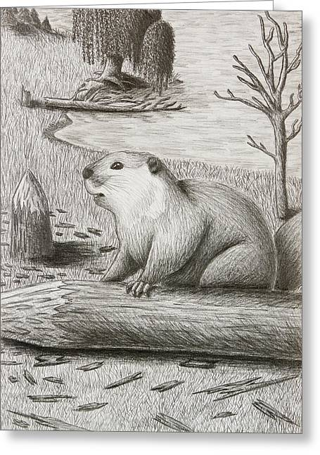 Willow Lake Drawings Greeting Cards - Beaver Greeting Card by Jeanette K
