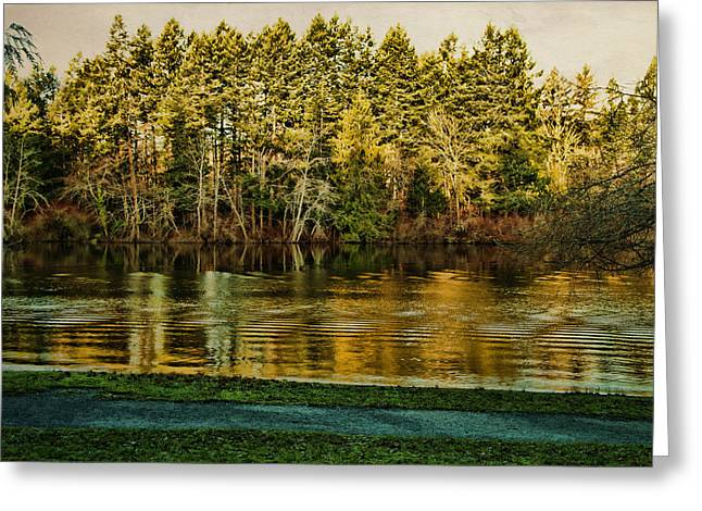 Smoothness Greeting Cards - Beaver Lake Greeting Card by Marilyn Wilson