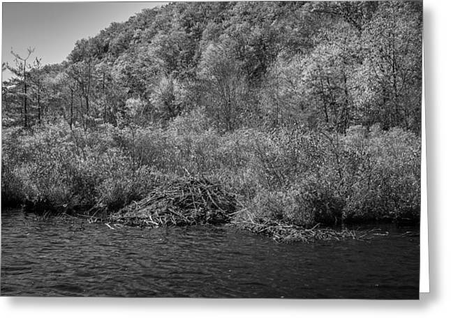 Beaver Greeting Cards - Beaver Lodge Green Pond Morris County New Jersey Painted BW  Greeting Card by Rich Franco