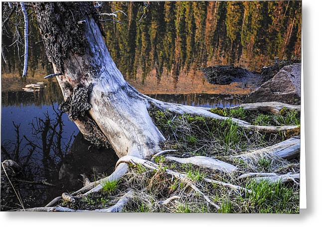 Beaver Pond Reflection 2 Greeting Card by Aaron Spong