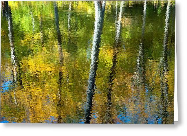 Gatineau Park Greeting Cards - Beaver Pond Reflections - 3 Greeting Card by Rob Huntley