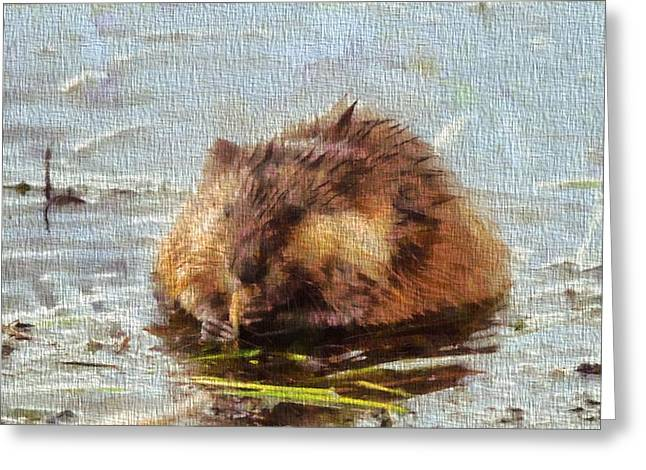 Beaver Greeting Cards - Beaver Portrait On Canvas Greeting Card by Dan Sproul