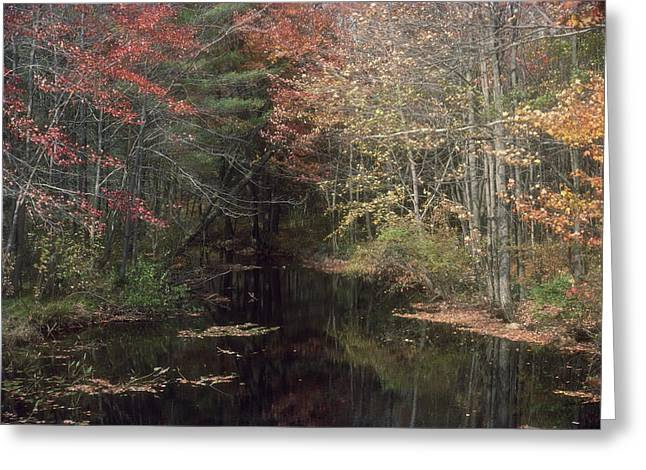 Recently Sold -  - Beautiful Creek Greeting Cards - Beavers Haunt Greeting Card by Bruce Thompson