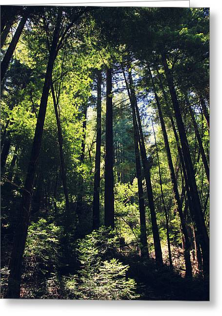 Redwood Tree Greeting Cards - Because You Loved Me Greeting Card by Laurie Search