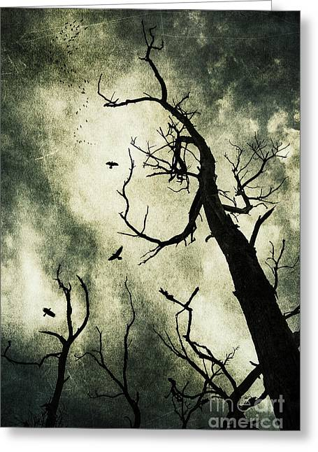Bare Trees Greeting Cards - Beckoning Greeting Card by Andrew Paranavitana