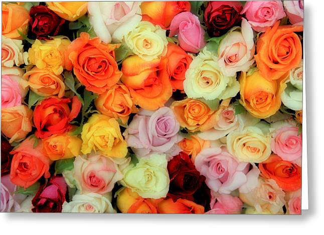 Rose Petals Greeting Cards - Bed of Roses Greeting Card by Tony Grider