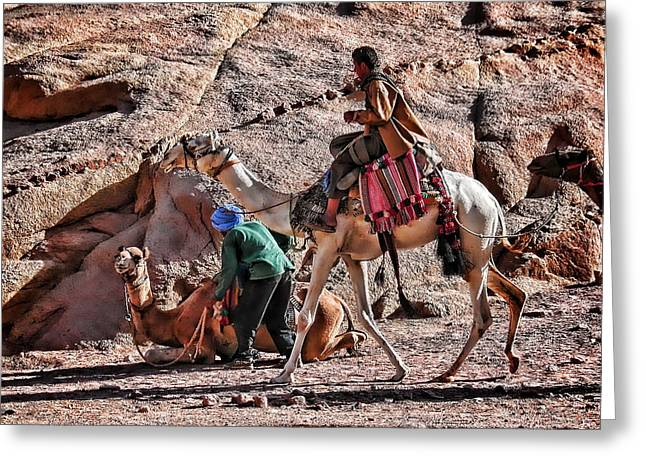 Sinai Monastery Greeting Cards - Bedouins on Camels Greeting Card by Terry Fleckney