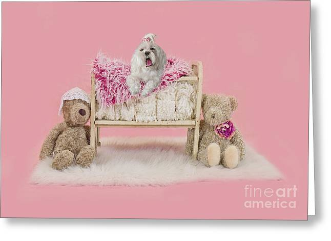 Sleepy Maltese Greeting Cards - Maltese Bedtime Greeting Card by Andrea Auletta