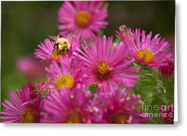 Bee Greeting Card by Alana Ranney