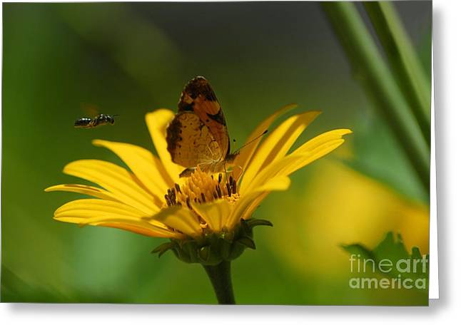 Butterfly In Motion Greeting Cards - Bee And Butterfly Greeting Card by Pamela Shane