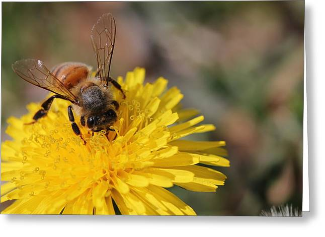 Bee And Dandelion Greeting Card by Lorri Crossno