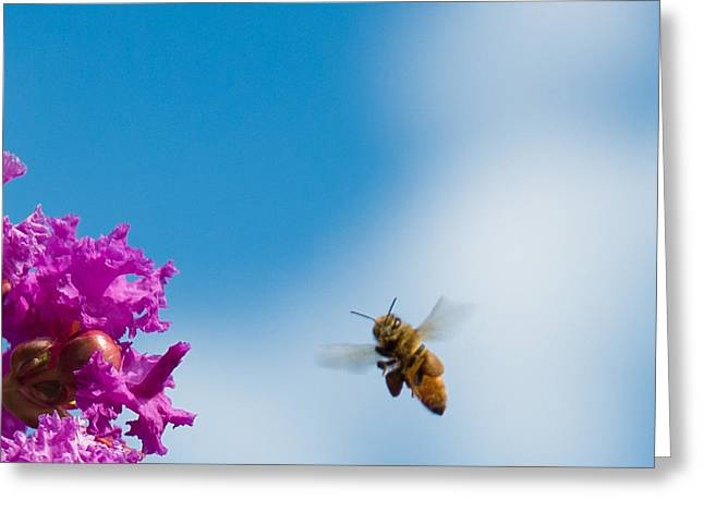 At Work Greeting Cards - Bee Aware Greeting Card by Kathi Shotwell