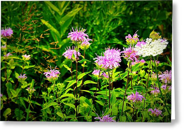 Landscape Posters Greeting Cards - Bee Balm of Butterfly Gardens of Wisconsin Greeting Card by Carol Toepke