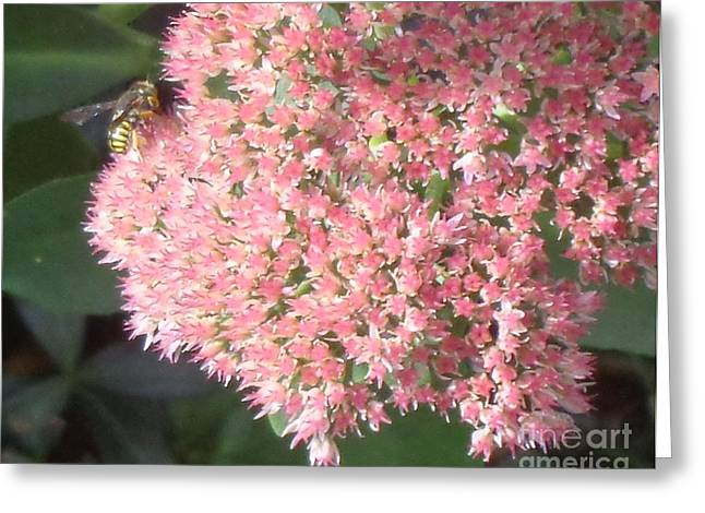 Botanical Greeting Cards - Bee Climbing Greeting Card by Christina Verdgeline