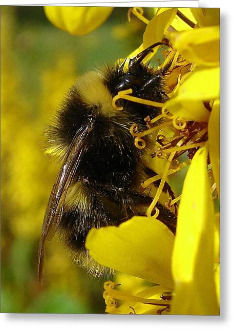 Wildlife Imagery Greeting Cards - Bee Close Up Greeting Card by Ramona Johnston