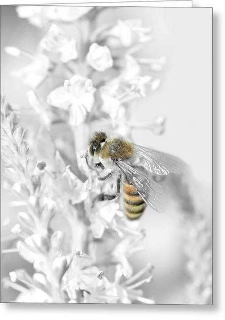 Single Mixed Media Greeting Cards - Bee collecting pollen Greeting Card by Toppart Sweden