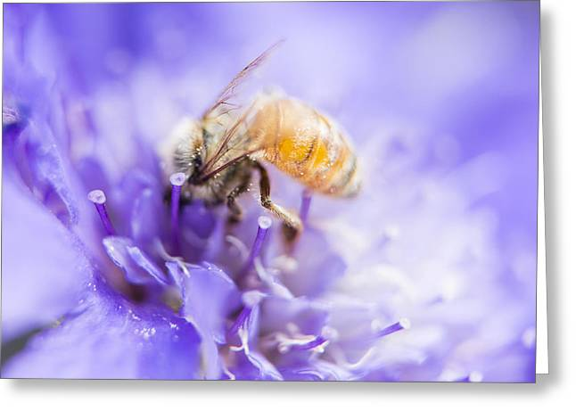 Bee Dream Greeting Card by Caitlyn  Grasso