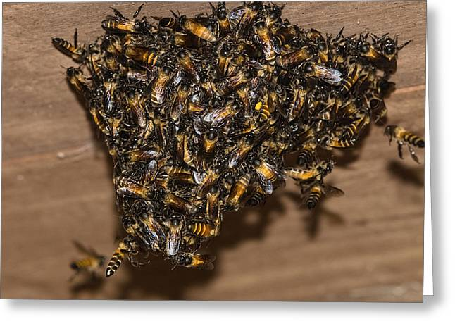 Bee In Flight Greeting Cards - Bee Group Swarming India Greeting Card by Konrad Wothe
