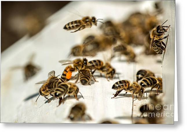 Beekeeping Greeting Cards - Bee Hive  Greeting Card by Iris Richardson
