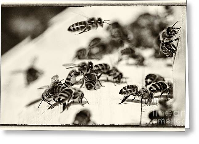 Beekeeping Greeting Cards - Bee Hive Sepia Tone Greeting Card by Iris Richardson