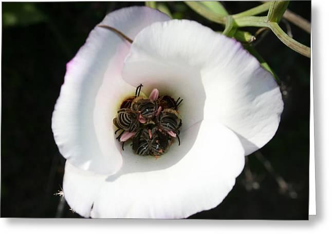 Flowers In California Greeting Cards - Bee-In Greeting Card by Ellen Henneke