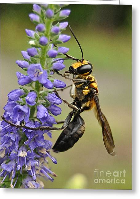 Bee Kind Greeting Card by Kathy Baccari