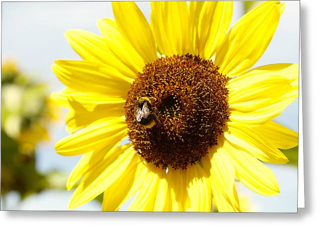 Bumblebee Greeting Cards - Bee Greeting Card by Les Cunliffe