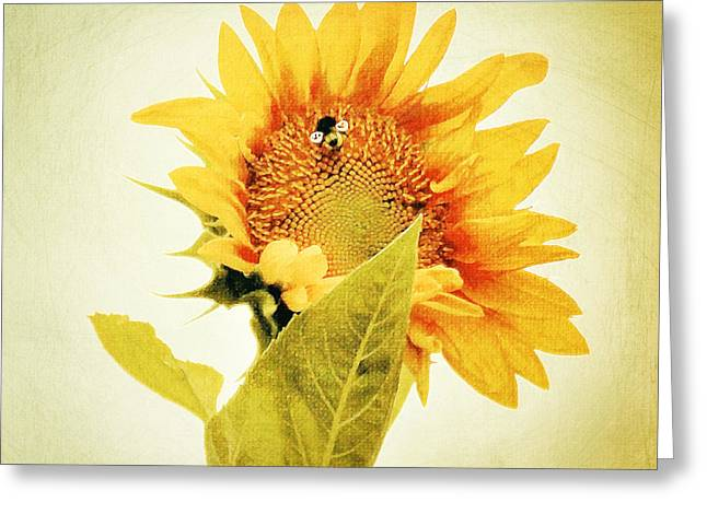 Pallet Knife Greeting Cards - Bee Mine - Paint Greeting Card by Anita Faye