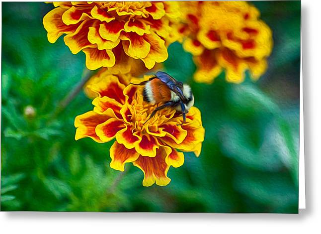 Wolf Creek Greeting Cards - Bee My Friend Miss Marigold Greeting Card by Omaste Witkowski