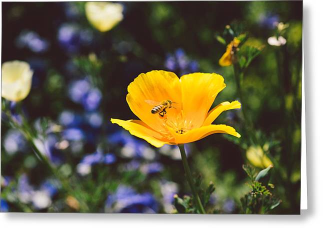 Floral Photographs Greeting Cards - Bee Greeting Card by Nastasia Cook