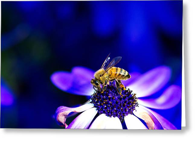 Straps Greeting Cards - Bee on flower Greeting Card by Andy Fung