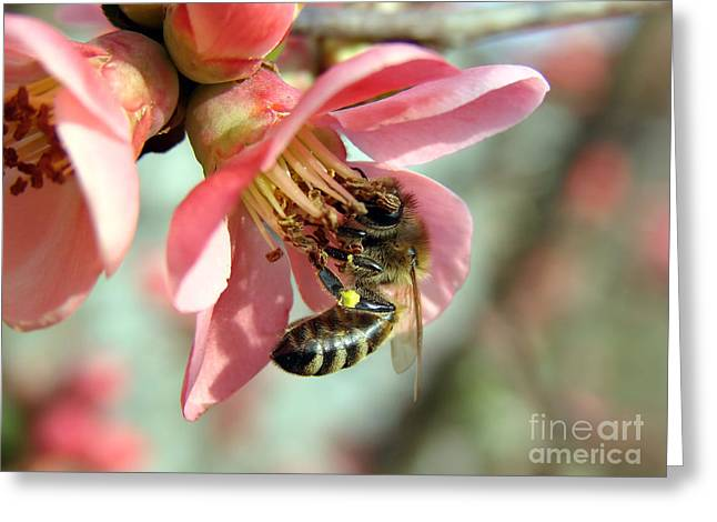 Sunlight On Flowers Greeting Cards - Bee On Flower Greeting Card by Dan Radi
