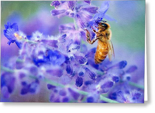 Tubular Greeting Cards - Bee on Russian Sage #2 - Square Crop Greeting Card by Nikolyn McDonald