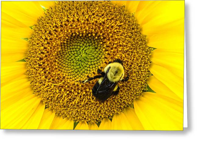 Green And Yellow Greeting Cards - Bee on Sunflower Greeting Card by Photographic Arts And Design Studio
