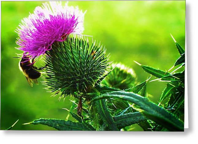Fecundation Greeting Cards - Bee On Thistle Greeting Card by Joy Nichols