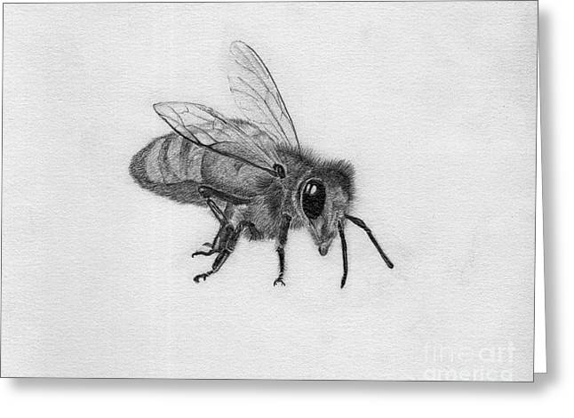 Antenna Drawings Greeting Cards - Bee Pencil Drawing Greeting Card by Dan Julien